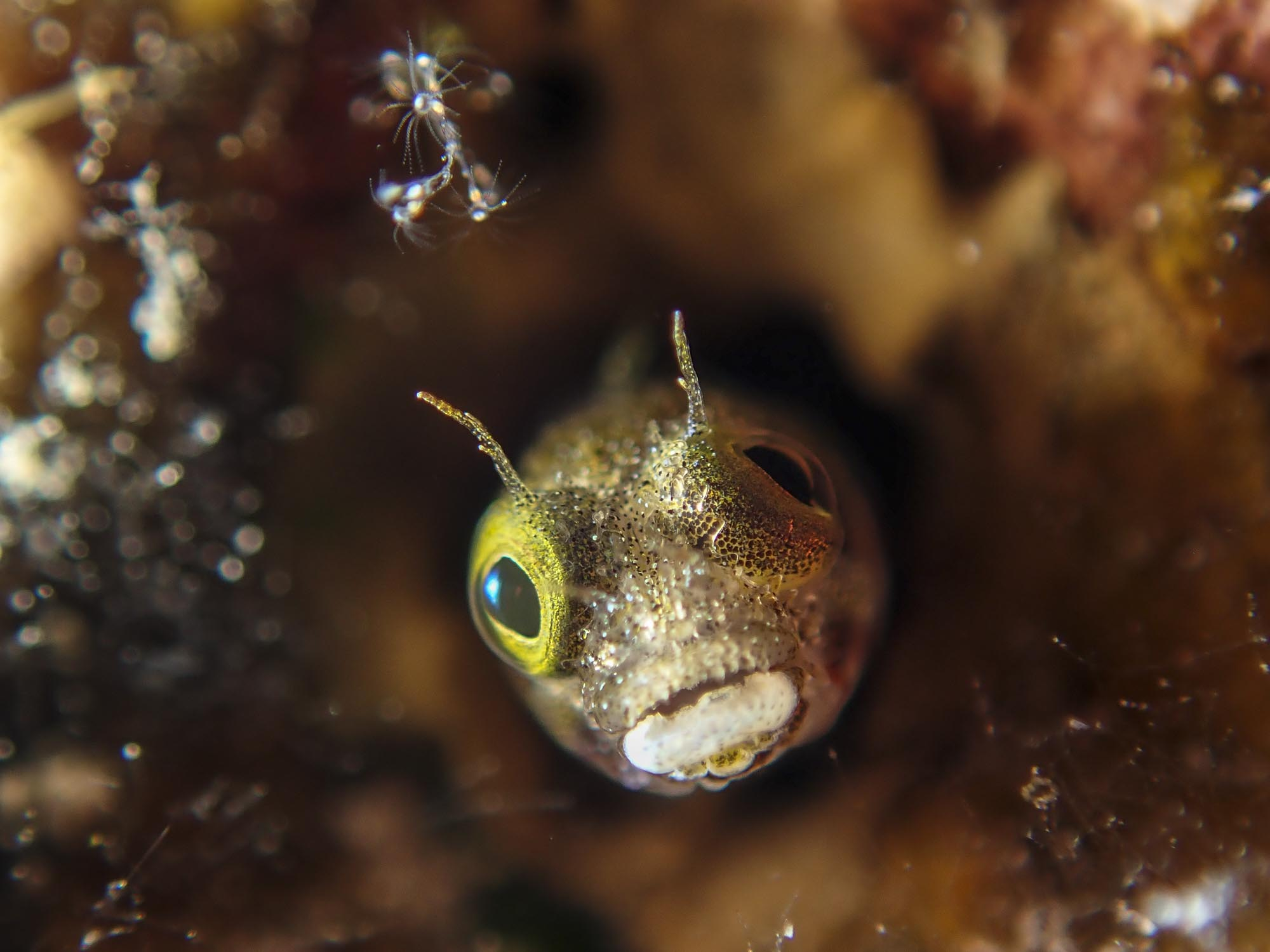 Olympus Tough Tg 5 Underwater Review The Digital Shootout Black Kamera Read