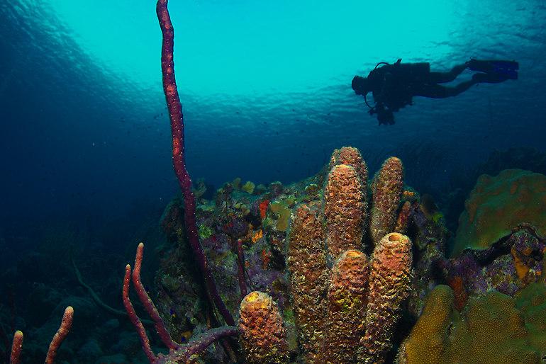The Digital Shootout Underwater Imaging Workshop